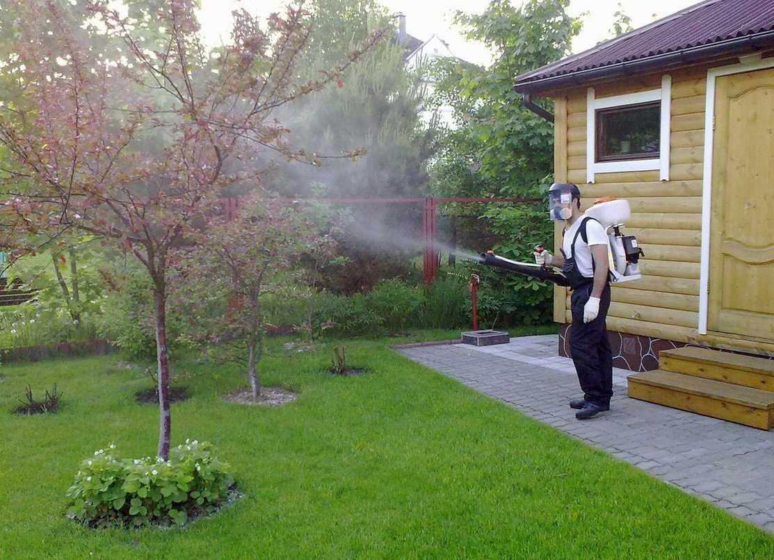 Как и когда обработать сад весной